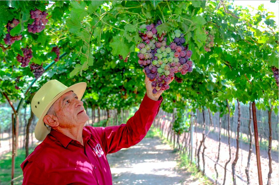 El valor del vino queretano